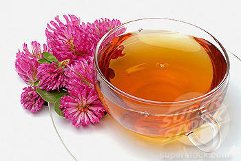 Medicinal tea of Red Clover, Trifolium pratense